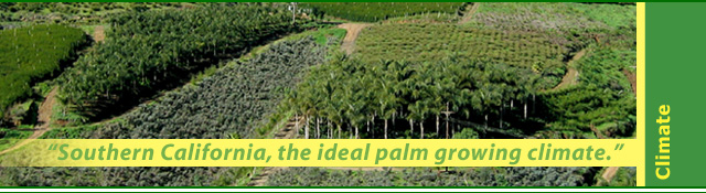 Ideal palm tree growing climate